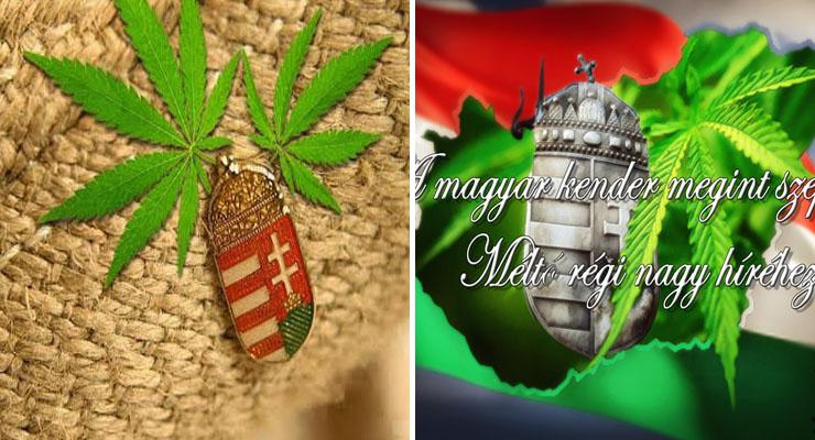 Kenderes gyógymódok az ősi magyar orvoslásban: őseink is tisztában voltak a növény csodatévő erejével!