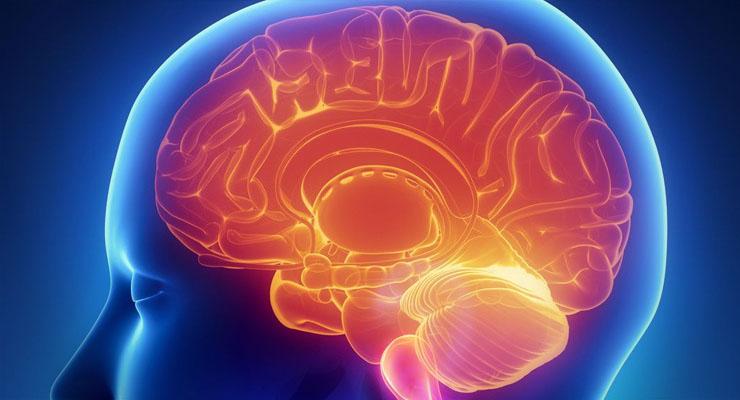 Magyar siker: olyan az agyunk, mint a világháló, megdöbbentő felfedezést tettek!