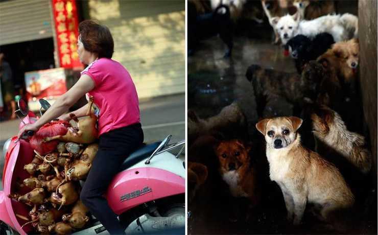 yulin kutyahus fesztival 1 0aea40d613